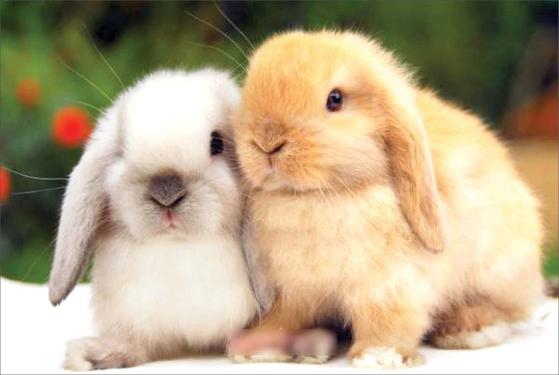 دردسر خیلی بد برای بچه خرگوش